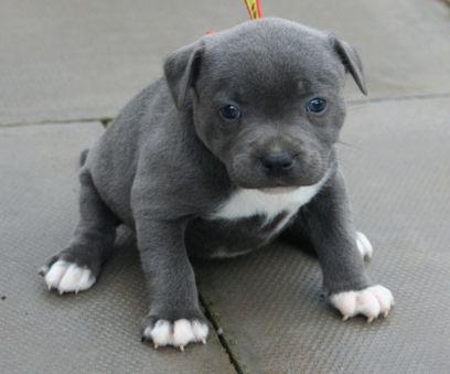 tekop hund til salg