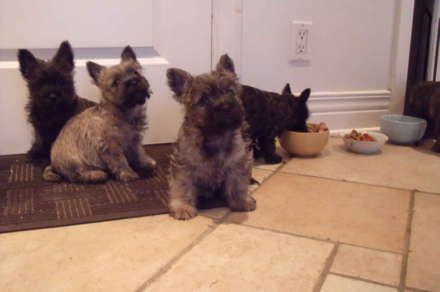 Hunde til salg Hovedstaden, hvalpe købe Hovedstaden, hvalpe købe in Hovedstaden, hvalpe hunde ...